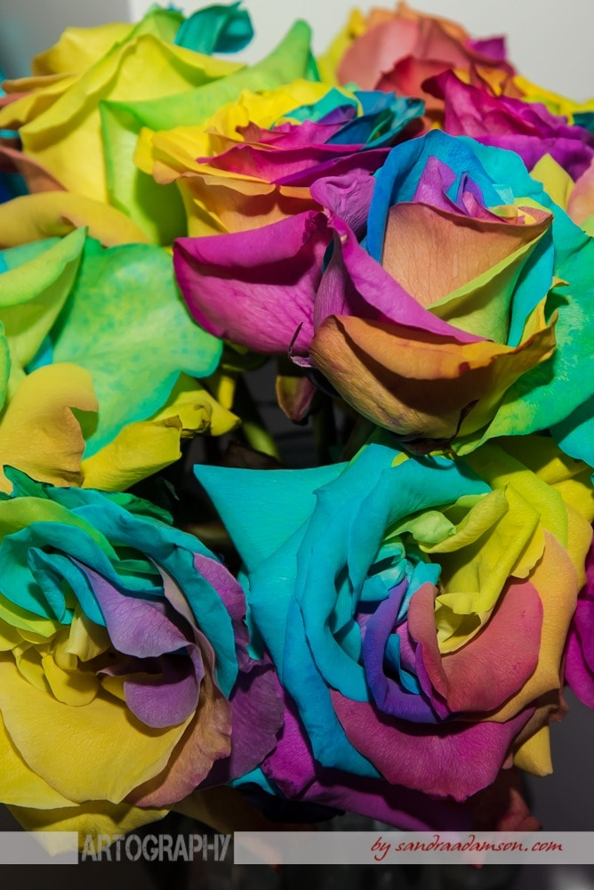LGBT rainbow bridal bouquet of roses.