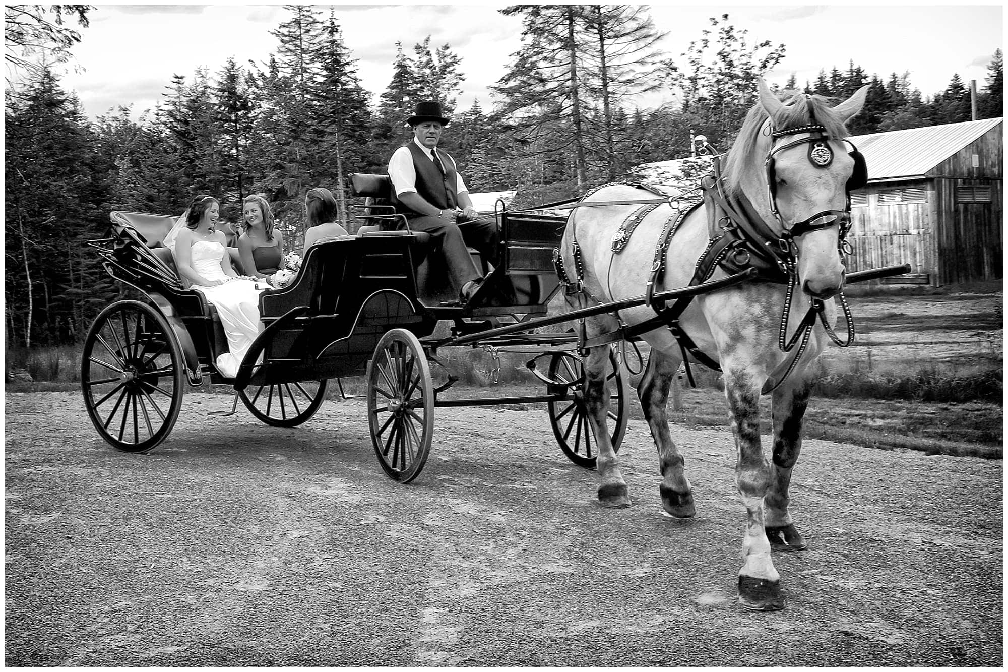 The bride arriving to her wedding ceremony in horse and carriage at Hatfield Farm in Halifax, NS captured by Halifax Nova Scotia wedding photographers Sandra Adamson Studios.