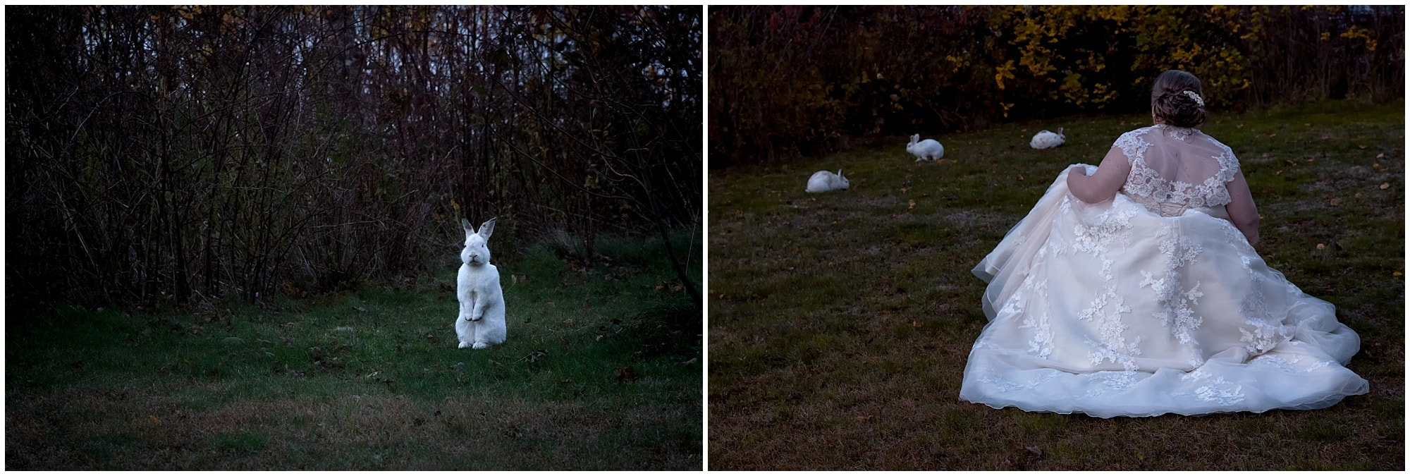 A bride sneaking up to the bunnies trying to keep her dress quiet so she can hopefully feed one at White Point.